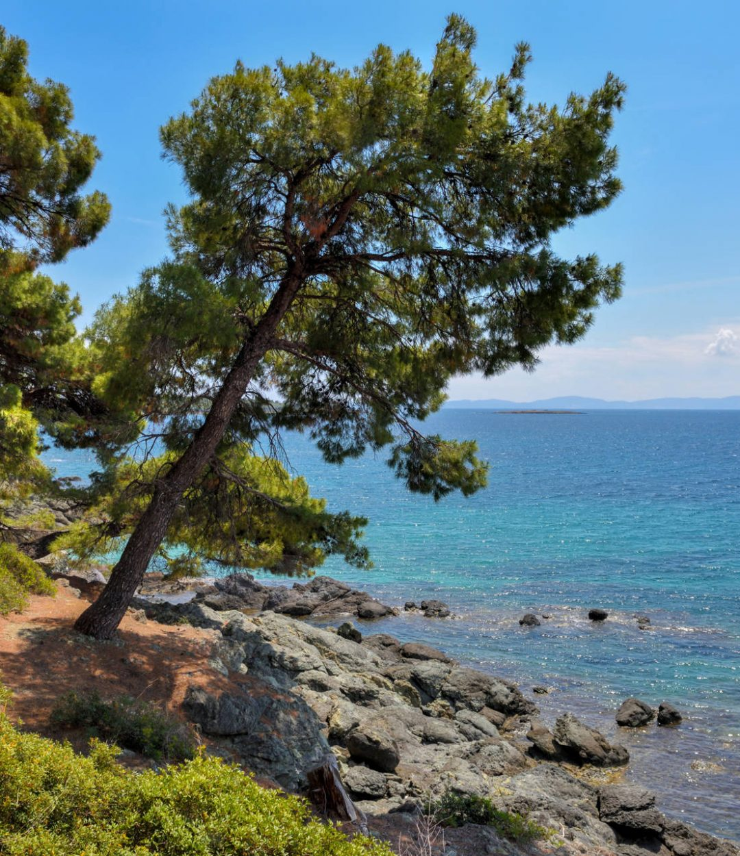 sea-view-from-beach-pine-forest-tree-by-the-sea-in-TXGU6R4